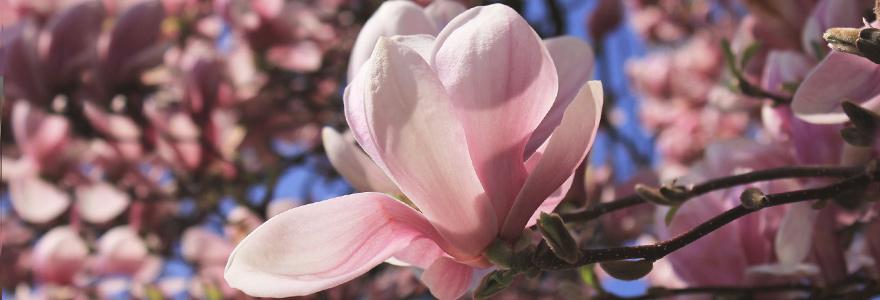 [Bild: meditation.jpg]